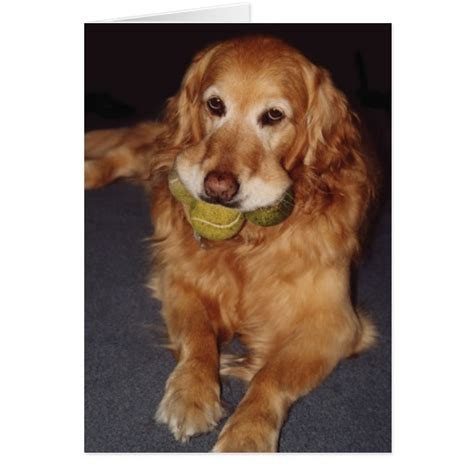 golden retriever humor golden retriever with balls birthday card zazzle
