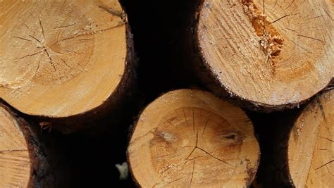 stack  wood logs stock footage video  shutterstock
