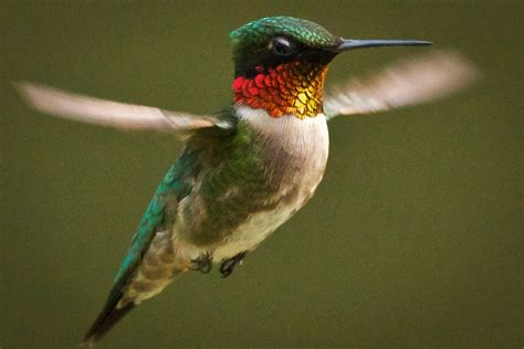 feather tailed stories hummingbird feeders