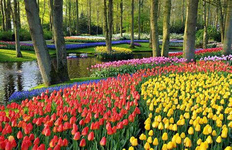 netherlands tulip fields the tulip fields of holland hellomagazine com