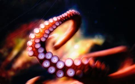 colorful octopus wallpaper octopus tentacle hd wallpaper wallpaper hot unique