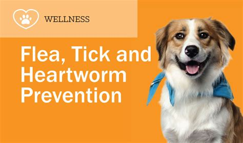 flea tick and heartworm prevention for dogs flea tick heartworm prevention featuring seresto and frontline plus