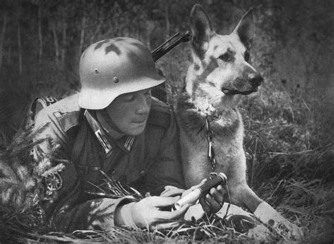 libro world war ii german ww2 german soldier with dog message h i s t o r y w w 2 messages military