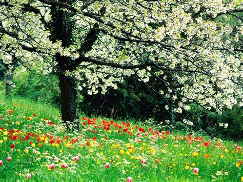 beautiful spring beautiful spring flowers wallpapers beautiful flowers