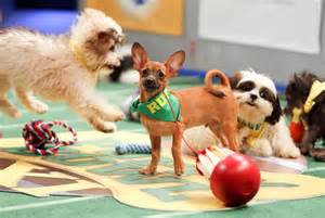 puppy bowl 2015 puppy bowl 2015 photos puppy bowl xlix check out the adorable from the