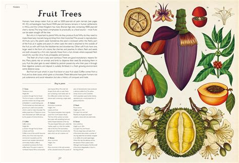 botanicum poster book welcome botanicum is a breathtaking floral encyclopaediaeye on design eye on design