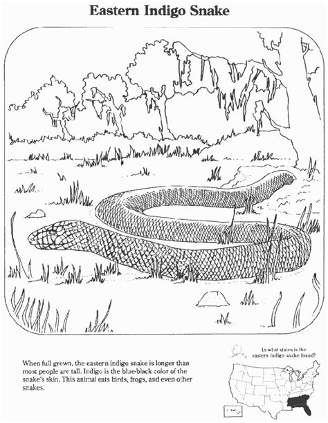 coloring pages extinct animals eastern indigo snake education coloring pages
