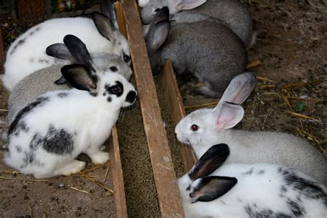 minicuentos de conejos y la alimentaci 243 n de los conejos jalasano