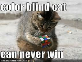 cats color vision animal pictures cat with rubix cube breeds picture