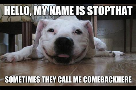 dumb dogs 11 reasons why a dumb af is awesome cuteness