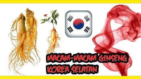 Ginseng Di Korea Selatan buat yang kepo macam macam ginseng yang ada di korea selatan