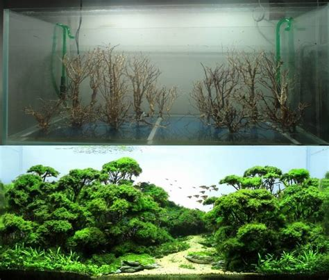 cool aquascapes 24 best fresh water tank ideas images on pinterest