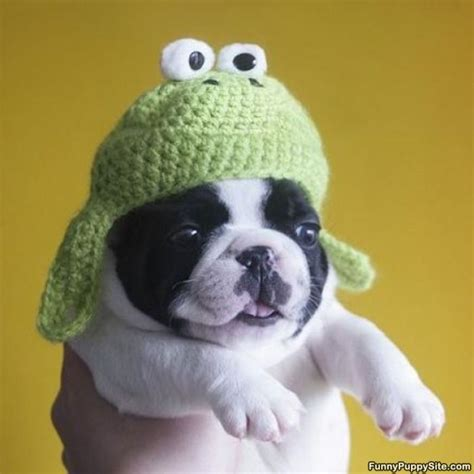 puppies with hats puppy hat funnypuppysite