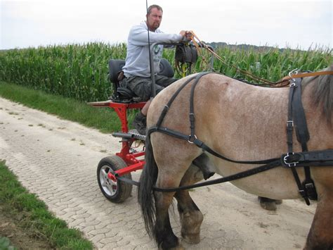 Draft horse village view topic drafthorses from germany says