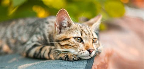 alimenti gatti alimenti monge alimenti per gatti alimenti per cani