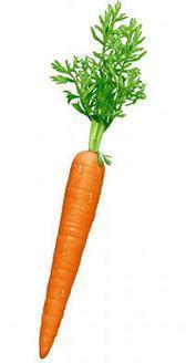 alimenti ricchi di vitamina a lista di alimenti con