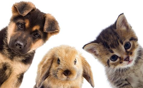 puppies and bunnies cat and vaccinations in australia