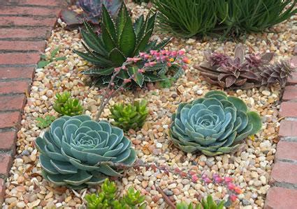 landscaping garden design  succulents lovetoknow