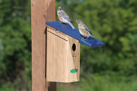 discourage house wrens from entering your birdhouse