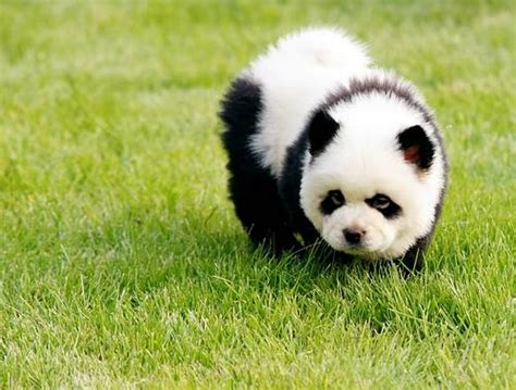 Mainan Boneka Robot Anjing Lovely Animal dosen elizabeth s kom mm