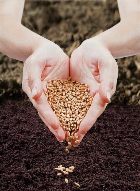 sowing seeds 21 jpg