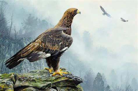 golden eagle wallpaper www pixshark images