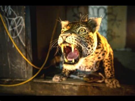 massive leopard in london for big cat week   doovi