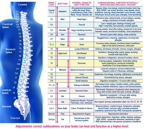 Neuro Cleanse Detox Maximized Living by Nervous System Vital Chiropractic Eagan Mn