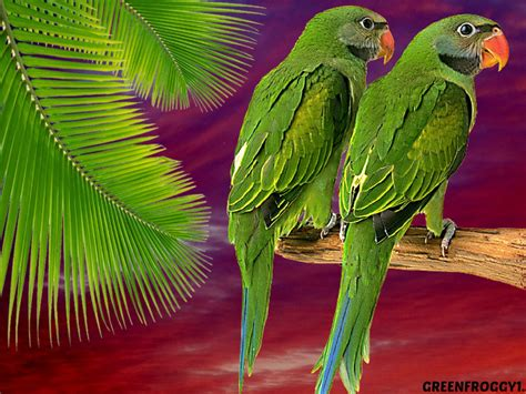 wallpaper green with birds green parrots wallpaper and background 1333x1000 id 426625