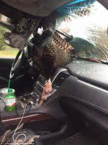 Car Rental Age Turkey Turkey Smashed Into Family S Rental Car In Indiana