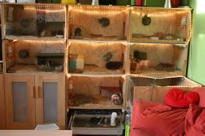 How To Build A Half Wall Bookcase Welcome To The Guinea Pig Palace Ikea Hackers Ikea Hackers