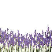 Kaca Mata Best Seller Frame Clip On Cokelat Doff Minus Clip Of Sweet Lavender Herb K9472539 Search Clipart