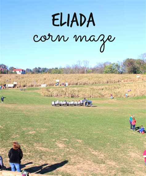 eliada corn maze a stroll through nature a thousand