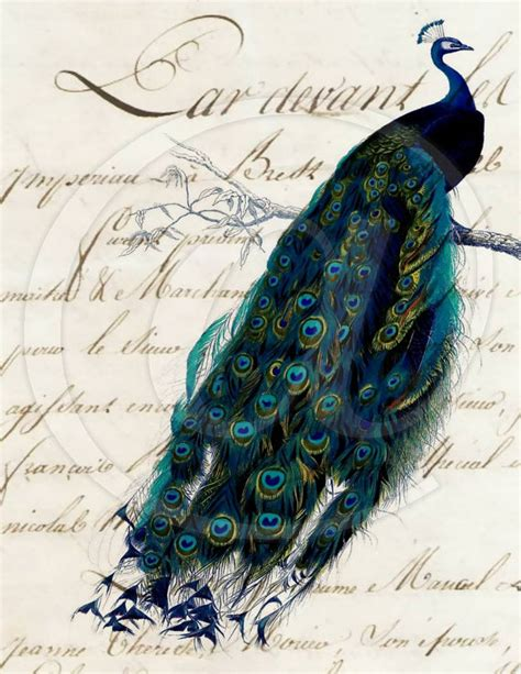 Handmade Sheet Cards - script peacock 8 5x11 digital collage sheet by