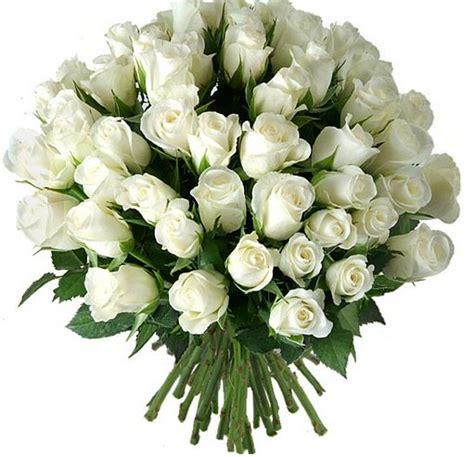 imagenes de rosas blancas y rosadas im 225 genes de rosas rojas blancas azules negras ramos y