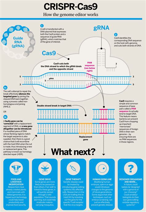 crispr cas cut out the hype gene editing with crispr and the