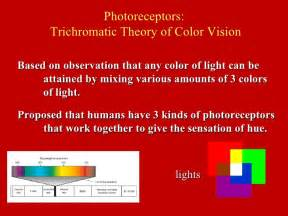 according to the trichromatic theory of color vision physio 3