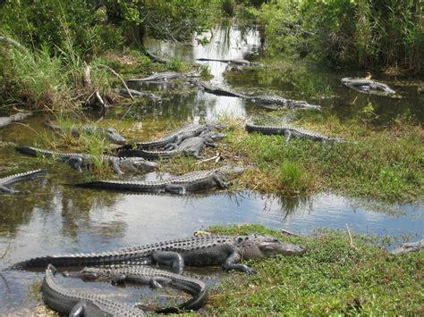 Kaos Banana World 12 Tx エバーグレーズ国立公園 アメリカ 自然遺産 世界遺産オンラインガイド