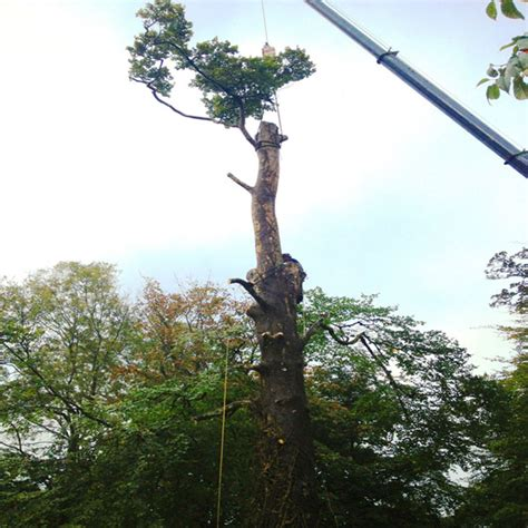 plymouth tree services tree consultancy plymouth tree surgeons