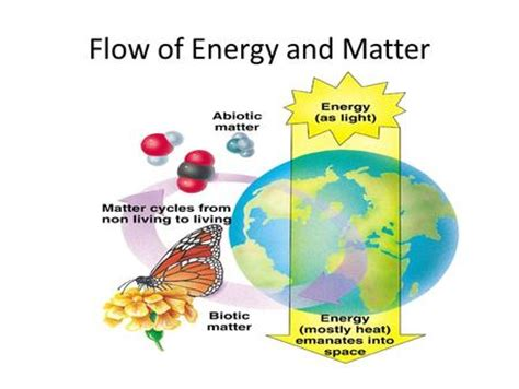 pattern of energy and matter flow is energy recycled in an ecosystem primus green energy