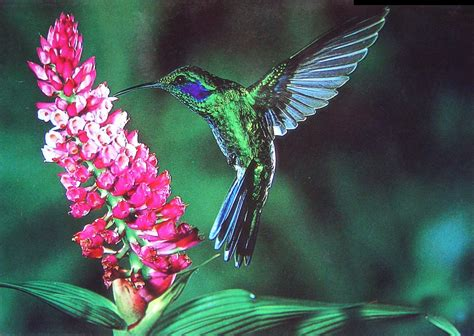 download kolibri wallpaper background 3326