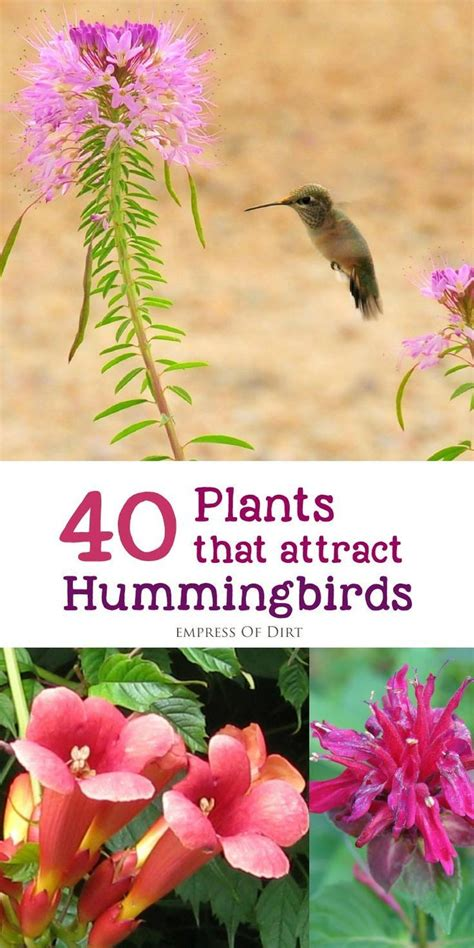 attracting butterflies and hummingbirds to your backyard 25 best ideas about perennial flowering plants on