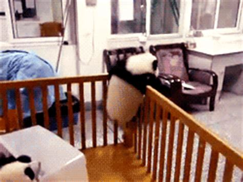 Baby Panda Climbing Out Of Crib by Panda Climbing Out Of Crib Gif Find On Giphy