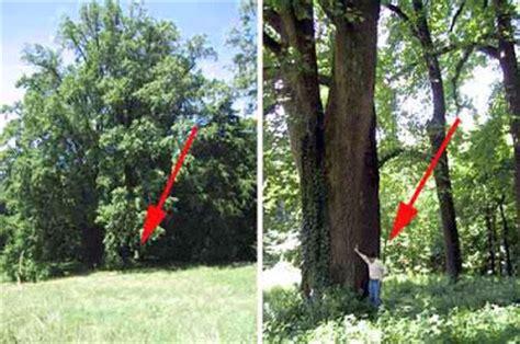 con al parco pi 249 alberi e meno amici in allegria gli alberi in italia alberi record