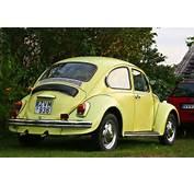 Beetle 1300jpg  Wikimedia Commons