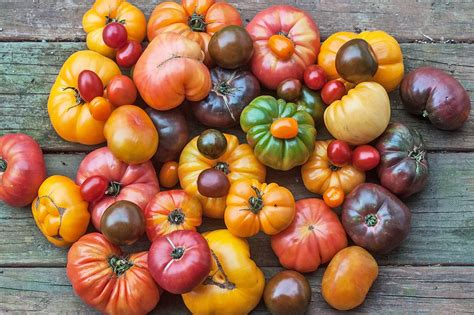 best tomato seeds tips for growing tomato plants from seed