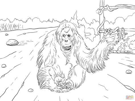 sumatran orangutan coloring page free printable coloring