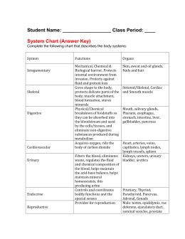 Systems Matching Worksheet Answers by Human Systems Matching Key