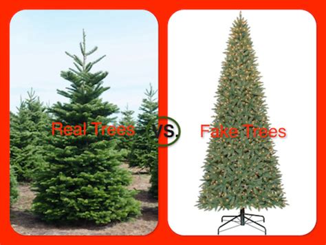 collection of real christmas tree vs artificial