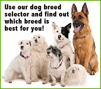 choosing the best dog breed for your family and children which dog breed is best for me and my family for the